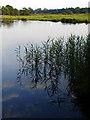 TM3890 : River Waveney at Geldeston Lock by Linda Bailey