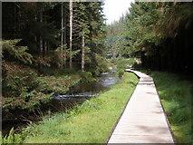 SN8587 : Forest Walk, Hafren Forest by Philip Halling