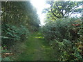 TM4158 : Footpath in Black Heath Forest near Snape by Roger Miller