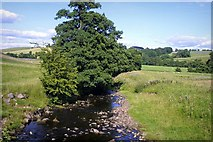 SD7152 : View From The Old Bridge by Stephen Nunney