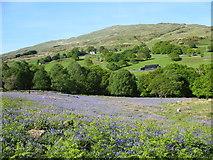 SH5848 : Bluebell Field in Nant Colwyn by Eric Jones