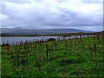 NC5314 : Looking towards Loch Shin by Donald H Bain