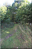 SE5214 : Footpath through Barnsdale Wood, looking from White Ley Road. by Bill Henderson