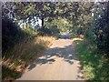 TM3267 : Hollow Lane near Shrubland Farm by Adrian Cable