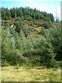 NR7892 : A Knapdale ridge by Patrick Mackie
