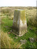 NZ7714 : Trig point ESE of Birchdale House by Phil Catterall