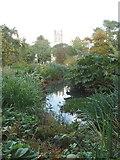 SP5105 : Pond in Oxford Botanic Garden by David Hawgood