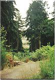 NU0702 : Gardens at Cragside by Carol Walker