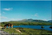 NF7938 : Pony by Loch Druidibeg, South Uist by Martin Creek
