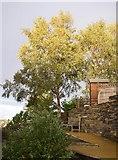 SE1321 : Silver Birches off Delf Hill, Rastrick by Humphrey Bolton