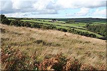 SS8429 : West Anstey: towards Lyshwell Farm by Martin Bodman