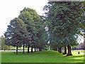 SJ6576 : Marbury Country Park - lime avenue by Mike Harris