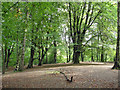 SJ8283 : Wilmslow (Styal) - clearing in Styal Woods by Mike Harris