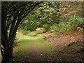NN8622 : Path, Knock of Crieff by Callum Black