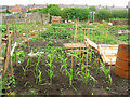 NZ2553 : Allotment behind front street Perkinsville by P Glenwright