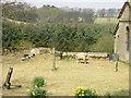NY9578 : Lambs in Thockrington churchyard by P Glenwright