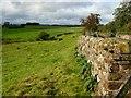 NY6429 : Newbiggin Moor by Stephen McKay