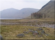 NN4546 : Trees in Glean Daimh by john rennie