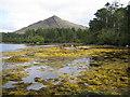 V7659 : Láithreach (Lauragh): Derreen Garden by Nigel Cox