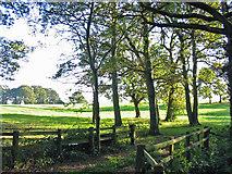 SU1012 : Oaks on the edge of pasture Alderholt Dorset by Clive Perrin