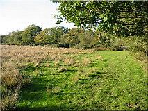 SU1012 : Rough pasture Alderholt Dorset by Clive Perrin