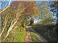 SE2580 : A nearly-green lane, near Binsoe by Oliver Dixon