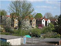 TQ1572 : Suburban back gardens in spring by Tony Wheeler