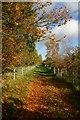 TL8480 : Byway to Thetford by Bob Jones