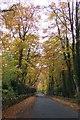 SP2527 : Beech lane in Autumn. by Jonathan Billinger