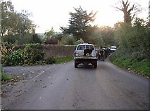 NY5636 : Rural traffic jam 2, Little Salkeld by Humphrey Bolton
