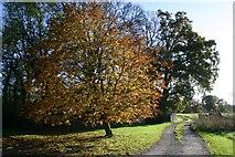 TL8063 : Horse chestnut in Autumn by Bob Jones