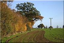 TL8063 : Field margin, Little Saxham by Bob Jones