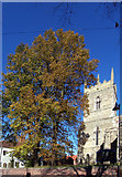 TA0322 : Autumnal colour in Burgate by David Wright