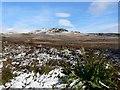NN9460 : Bracken and snow by Rob Burke