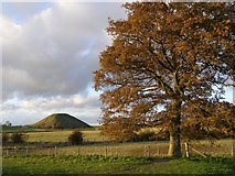 SU1068 : Autumnal oak near Swallowhead Springs by Jim Champion