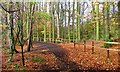 NZ4215 : Quarry Wood by Mick Garratt
