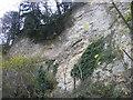 NZ4339 : Limestone cliffs, Castle Eden Dene by Les Hull