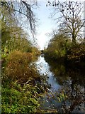 SU7251 : Autumn on the Basingstoke Canal by Hugh Chevallier