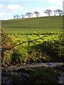SX5649 : Field near Wrescombe by Derek Harper