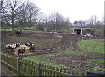 SE1321 : Christmas dinner for the horses, Delf Hill by Humphrey Bolton