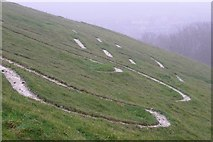 ST6601 : Giant detail, Cerne Abbas by Jim Champion