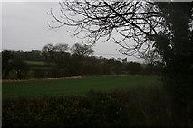 SK7260 : Near Beesthorpe Hall Farm by Rick Hall