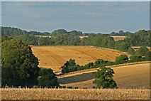 SU0017 : View toward Garston Down from 6d Handley (Sixpenny Handley) by Simon Barnes