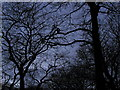 TA0728 : Trees at dusk in West Park by Andy Beecroft