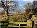 NU0900 : Access land below Healey by Derek Harper