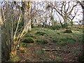 NU0900 : Woodland beside Black Burn by Derek Harper