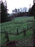 NU0702 : Meadow at Cragside by Derek Harper
