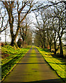 NJ9926 : The road to Knockhall in late winter by Martyn Gorman