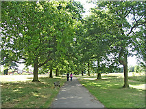 TQ3095 : Scarlet Oak avenue in Oakwood Park, N14 by Christine Matthews