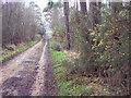 SU1011 : Bridleway from Alderholt to Cranborne Common by Maigheach-gheal